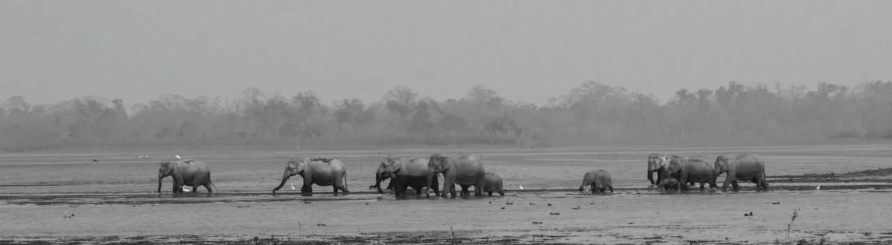 Adult And Cubs Black And White Black And White Photography Elephant Family Elephants Eye Em Around The World Eye Em Best Shots Eye Em Nature Lover EyeEm EyeEm Best Shots EyeEm Gallery Field Huge!! Kaziaranga National Park Landscape Mammal Marsh Landing Monochrome Nature Outdoors Powerful Animal The Creators Of Jungle The Giants Wild Landscape Wildlife Photography