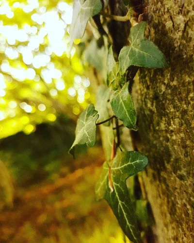 Nature Close-up Animals In The Wild Growth Leaf Animal Themes Green Color Day Outdoors Beauty In Nature Focus On Foreground Fragility Plant No People