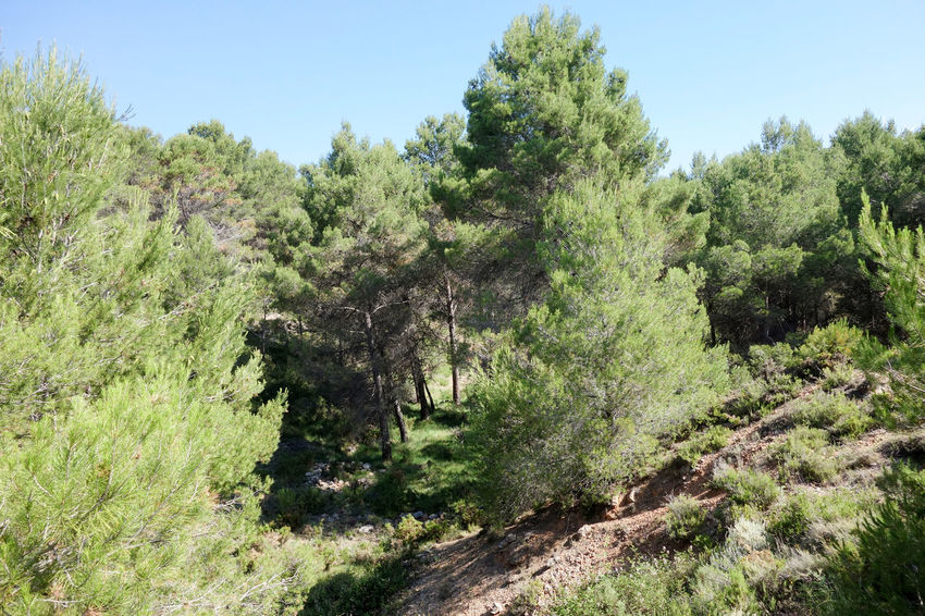 Bike Blue Sky Castellón Cycling Day Flora Forest Green Way Growth Landscape Nature Nature No People Outdoors SPAIN Tree València