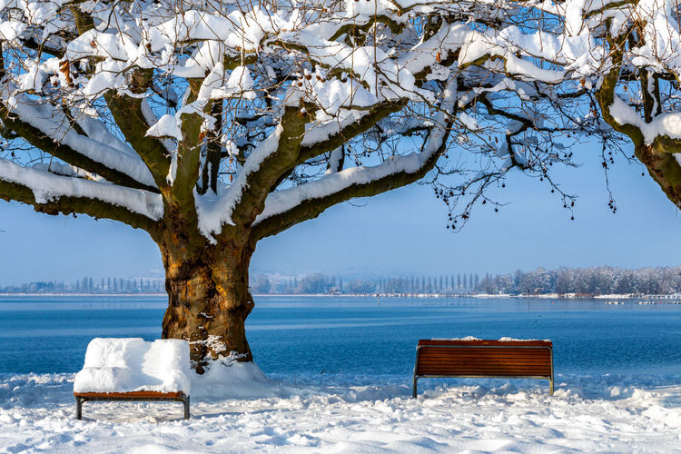 View of tree by sea during winter