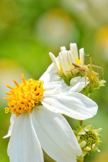 little spider on white flower Flower Spider Nature Natural Flora Palet Palea Park Garden Grass Grass Flowers Blooming Bloom