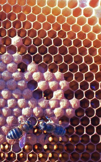 Inside the beehive. Larvas and the babysitters. EyeEm Nature Lover Nature_collection EyeEm Best Edits Macro_collection