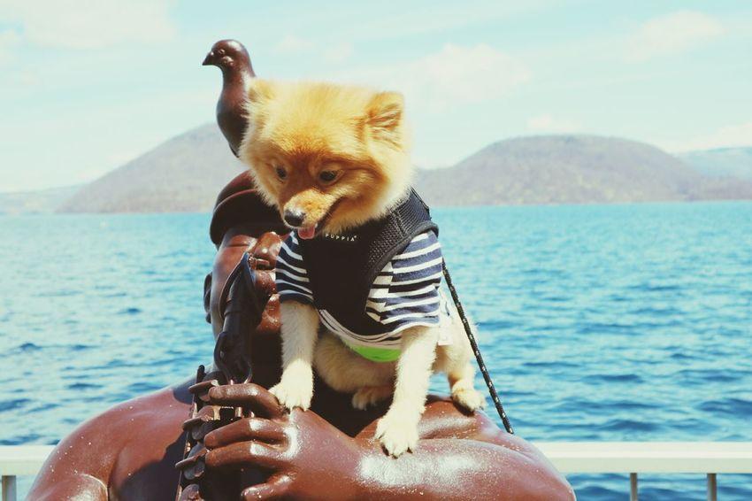 Dog Water Animal Pets Outdoors Day Mammal Sea Domestic Animals Nature Close-up No People Sky Animal Themes Spring 2017 Spring Blue Beauty In Nature 羊蹄山 Road Japan Cocoaya Hokkaido ポメラニアン 洞爺湖