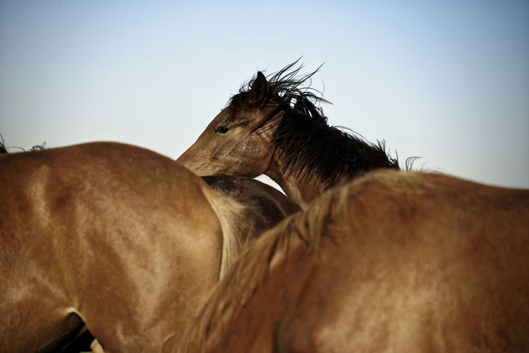 Low angle view of horse against clear sky