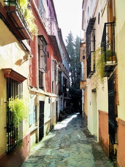 Calle de la Pimienta, en el barrio de Santa Crux Alley Architecture Building Building Exterior Built Structure City Life Cobblestone Day Diminishing Perspective Exterior Incidental People Leading Narrow Perspective Residential Structure Sidewalk Street The Way Forward Walking
