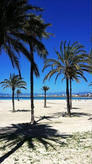 Beach Mallorca Españoles Y Sus Fotos Somosfelices