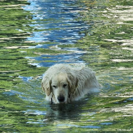 Bled Slovenia Fishing Dog Waiting