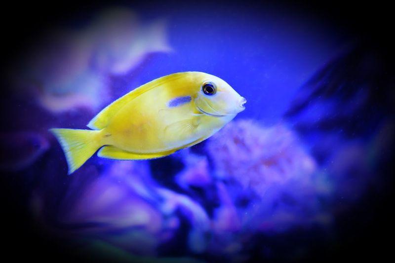 Animal Fish
