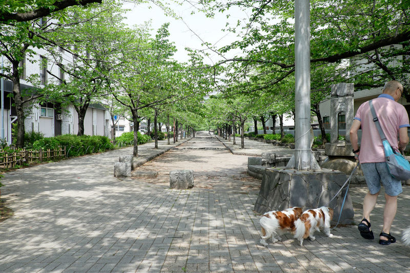 Full Length Rear View Of Man With Dogs Walking On Footpath In Park