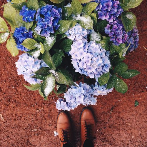 Flower Low Section Real People One Person Human Leg Directly Above High Angle View Freshness Shoe Leaf Day Outdoors Human Body Part Beauty In Nature Fragility Nature Flower Head