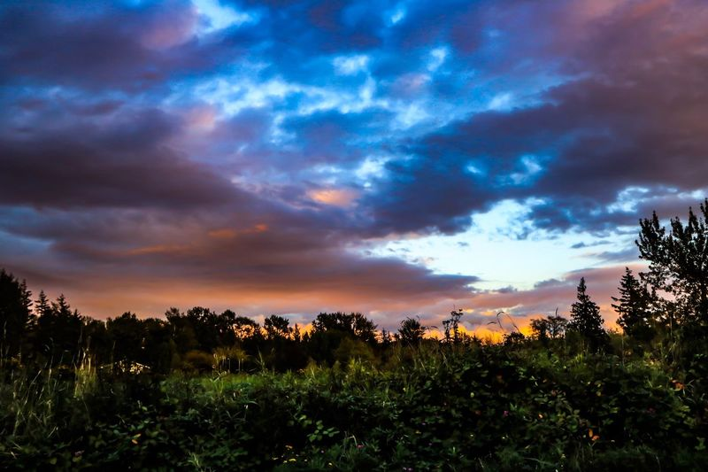 Plant Sky Cloud - Sky Beauty In Nature Growth Field Scenics - Nature Tranquility Tranquil Scene Land Nature No People Landscape Tree Flower Sunset Environment Flowering Plant Freshness Non-urban Scene