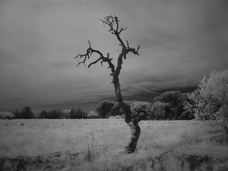 Beauty In Nature Branch Day Field Grass Infrared Photo Infrared Photography Landscape Nature No People Outdoors Sky Tranquility Tree