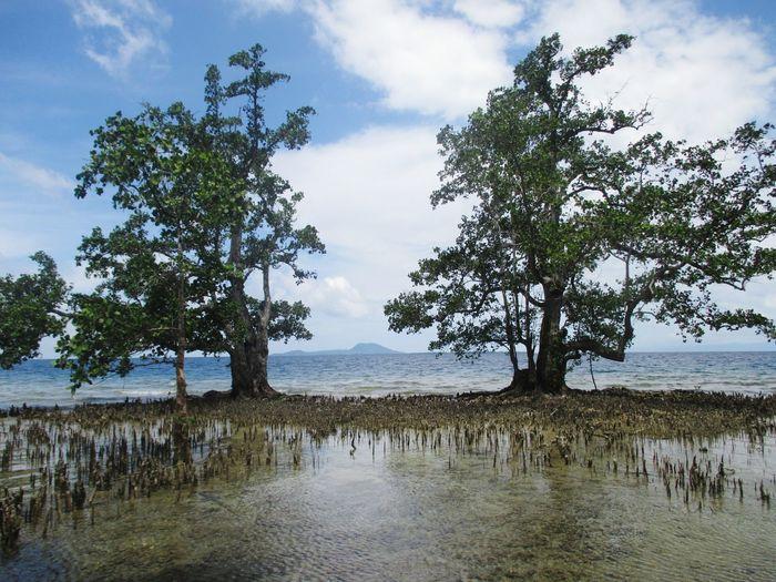 beach mangrove Indonesia_photography Halmahera Selatan Indonesian Visit Indonesia Halmahera Pesona Indonesia Daily Life Tree Water Sky Landscape