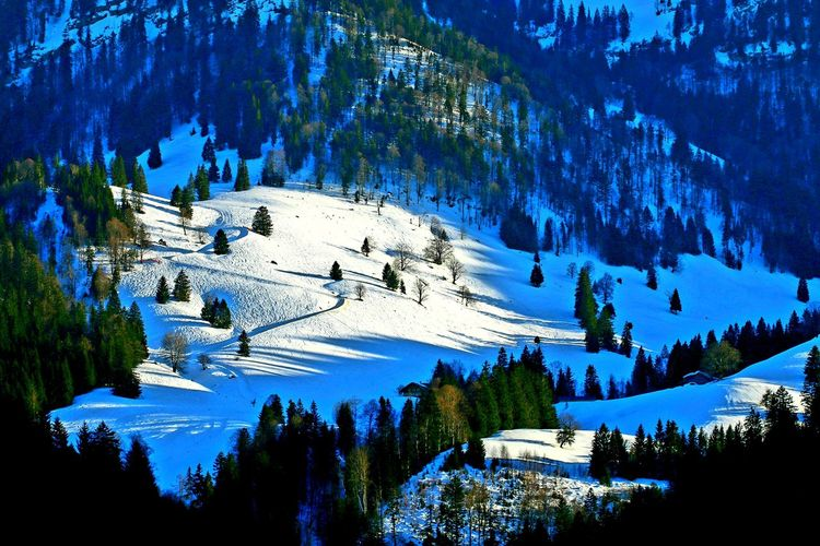 Tree Mountain Snow Forest Water Pine Tree Pinaceae Blue Sky Landscape Ski Lift