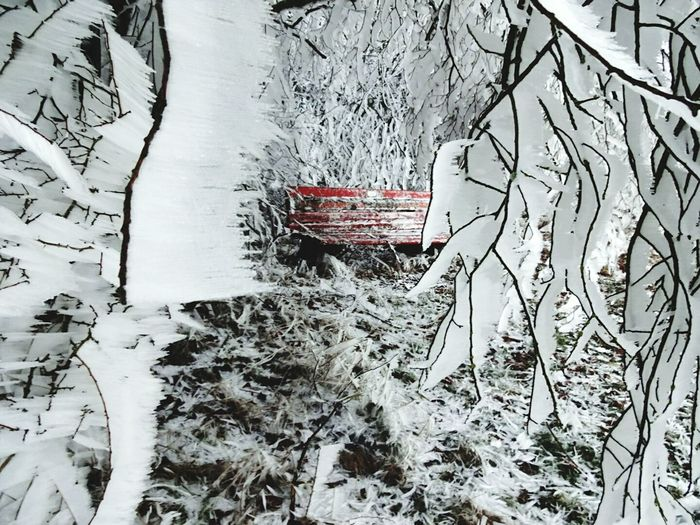 Rheinland Snow ❄ EyeEm Best Shots Waagerechteeiszapfen Rote Bank Shades Of Winter