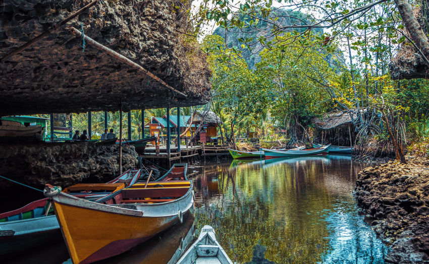 Boats moored on river by trees in forest