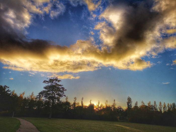 Tree Sunset Multi Colored Sunlight Dramatic Sky Autumn Sky Grass Cloud - Sky Moody Sky Cloudscape