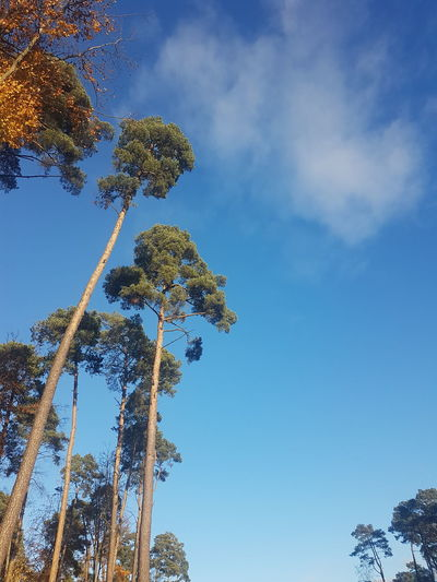 Tree Nature Sky Blue Beauty In Nature No People Forest Outdoors