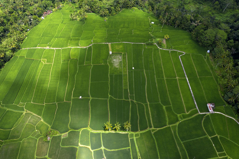 High angle view of green leaf on land