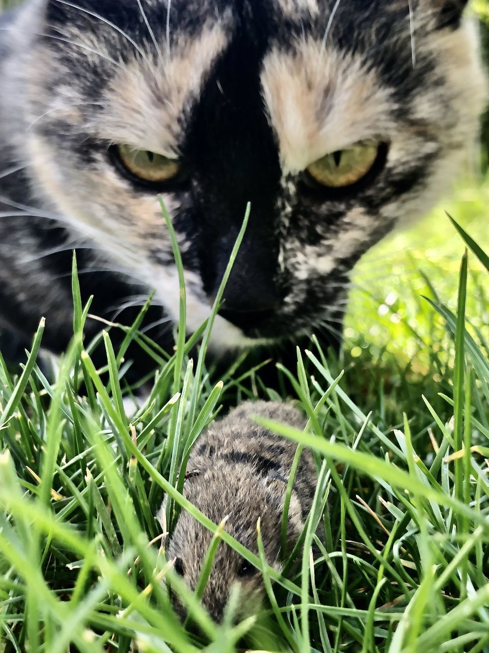 CLOSE-UP OF CAT ON GRASS