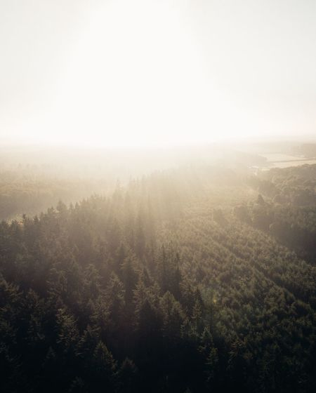 light is king Landscape_Collection Nature_collection Landscape Check This Out EyeEm Best Shots DJI X Eyeem Dji Drone  Dronephotography Aerial Shot Aerial View Forest Nature Tranquility Fog Tranquil Scene Beauty In Nature Landscape Scenics Outdoors Tree Mist Idyllic Hazy