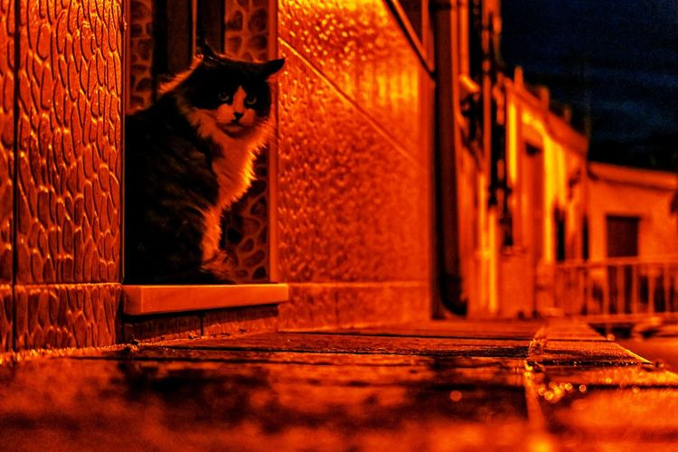 Cat sitting outside building at night
