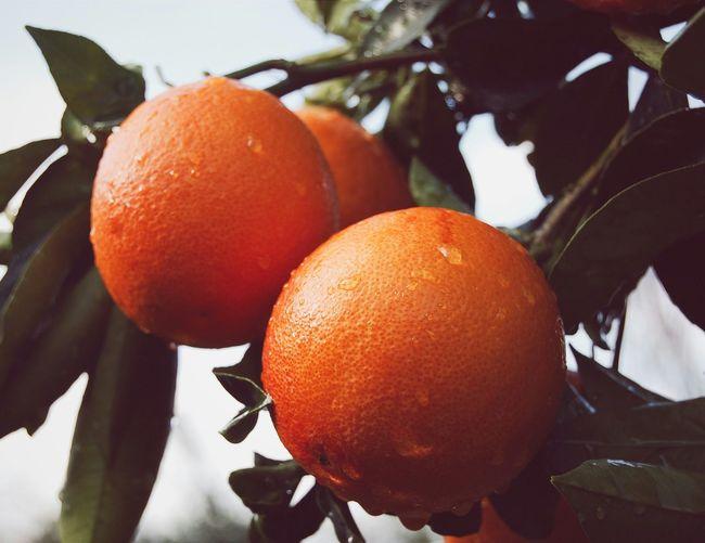 Orange Vscocam