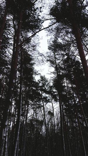 Все утро провела в лесу. Замерзла, но рада, что сделала фото:зз