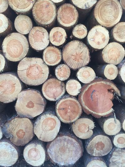 Massengrab😕 Full Frame Backgrounds Timber Lumber Industry Wood Log Firewood