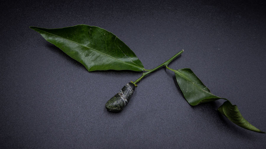 Plant Part Leaf Green Color No People Indoors  Studio Shot Close-up Gray Still Life Gray Background Freshness Nature Food And Drink Wellbeing Table Plant Beauty In Nature Food High Angle View Healthy Eating Black Background Leaves