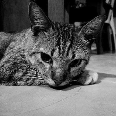 Someone's enjoying his time here in our room uninvited. Intruder  Meow Meow🐱 Cats Art Photography Relax