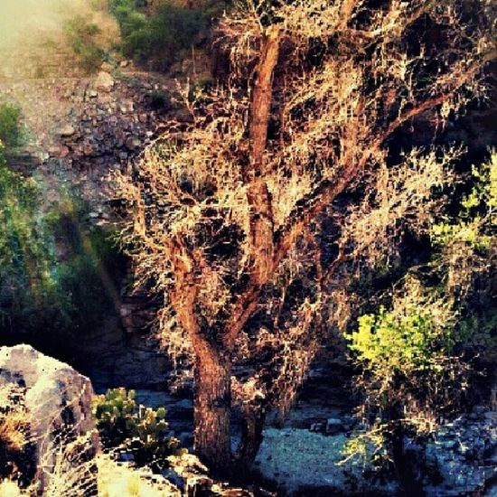 Instagramaz Igarizona Globeaz Desertlivin Oldtree Nature Desert Rocks Bushes Landscape Mountainside Drygrass Dirt Arizonahighways Arizona PixlrExpress Instagramhub Igersonly Instadesert Instagram @arizonaskies Lensflare @ibeautyofnature Awesomeview Naturewalk  :)
