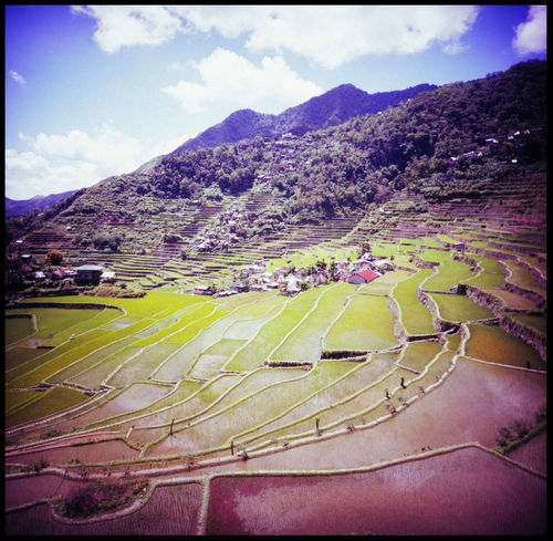 50 shades of rice Agriculture Analogue Photography ASIA Banaue Batad Farming In Philippines Green Rice Irrigation Lomography Medium Format Mountains Nature No People Philippines Rice Rice And Mountains Rice And Sky Rice Paddy Rice Terrace Stairways Rice Terraces Seedlings Slide Travel Young Rice