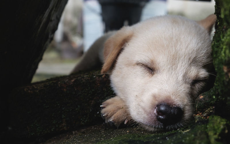 Close-Up Portrait Of Puppy Relaxing Outdoors