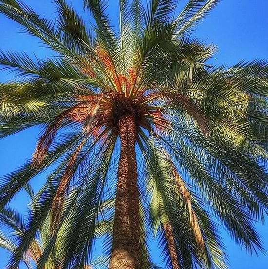 в небо пальмы небо флораифауна утро прогулкасхорошимчеловеком настроение palmtrees world_best world_bestsky nature flora mood morning park instaisrael instagram_israel instagram_israel_ insta_israel ig_israel picoftheday myisrael weekend