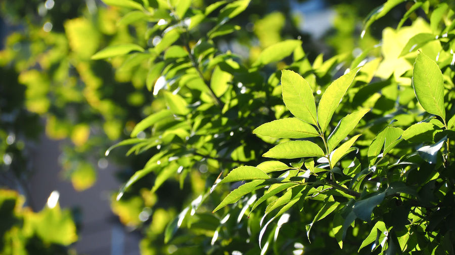 Low Angle View Of Fresh Green Leaves