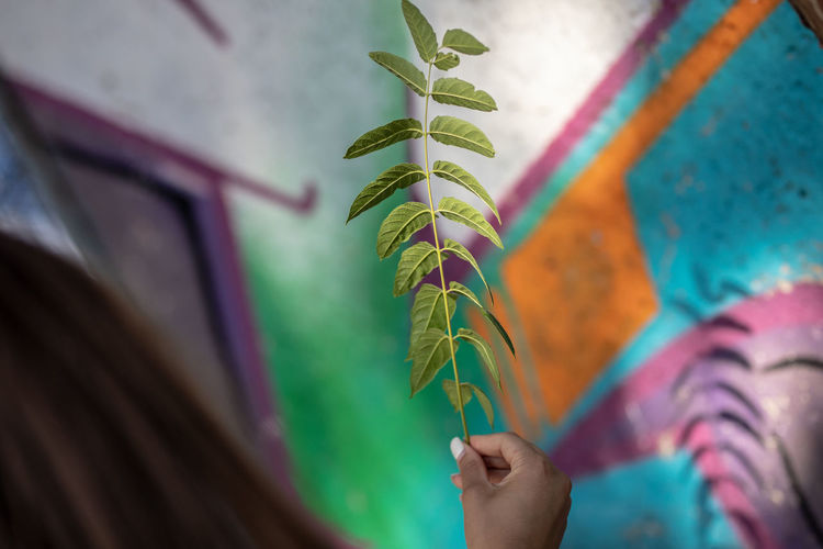 Cropped image of woman holding leaves against graffiti wall