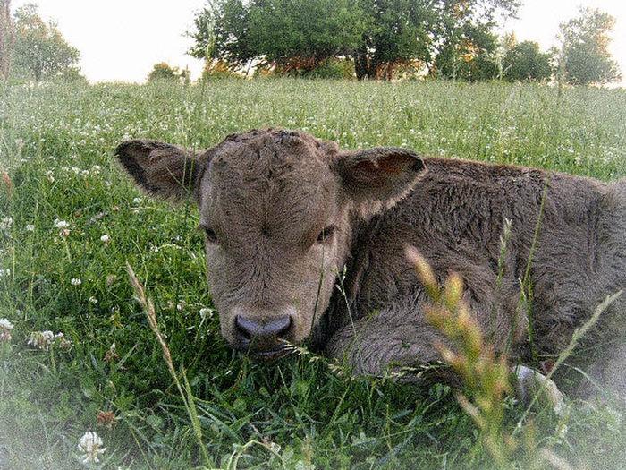 Horse grazing on grassy field