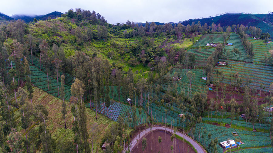 Road in the hills Scenics - Nature Landscape Plant Environment Nature Land Tree Tranquil Scene Tranquility No People Agriculture Day Mountain High Angle View Architecture Beauty In Nature Green Color Rural Scene Water Field Outdoors Bromo Bromo-tengger-semeru National Park Aerial View Aerial Photography