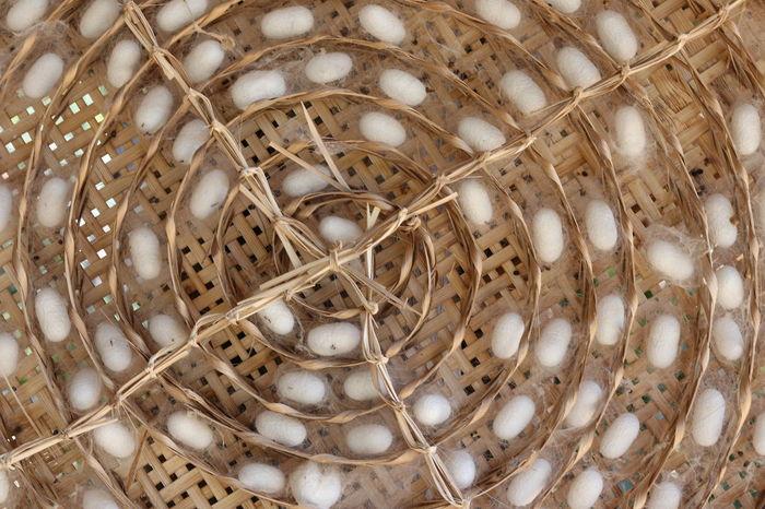 Cocoon Jim Thompson Farm Silkworm Silkworm Cocoon Thailand Thailand Culture Backgrounds Close-up Cocoons Day Silk Silkworms Thailand_allshots