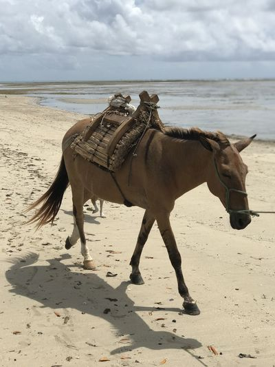 View of horse on beach against sky
