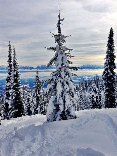 Knee deep snow Above The Clouds Beauty In Nature Cloud - Sky Cold Temperature Day Deep Snow Forest Kimberley, B.C Landscape Mountain Nature No People Non-urban Scene Outdoors Scenics Ski Hill Sky Snow Tranquil Scene Tranquility Tree Vertical Winter Go Higher