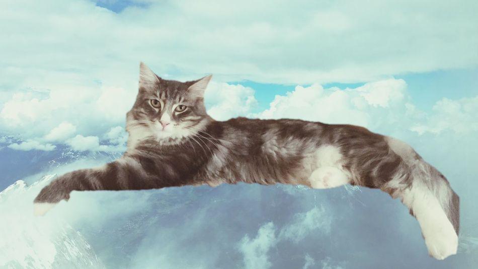 Wolkenkatze Pets Corner