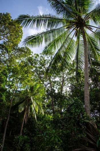 Palm Tree Thailand_allshots EyeEm Gallery Travel Destinations Bestoftheday EyeEm Best Shots - Landscape EyeEm Nature Lover EyeEm Best Shots Beachlovers Nikonphotography Eye4photography  Thailand Thailand_allshots EyeEm Landscape Point Of View Thailand Good Life. Photographer Eyeemphoto Vacations Outdoors Green Color No People Beauty In Nature Low Angle View
