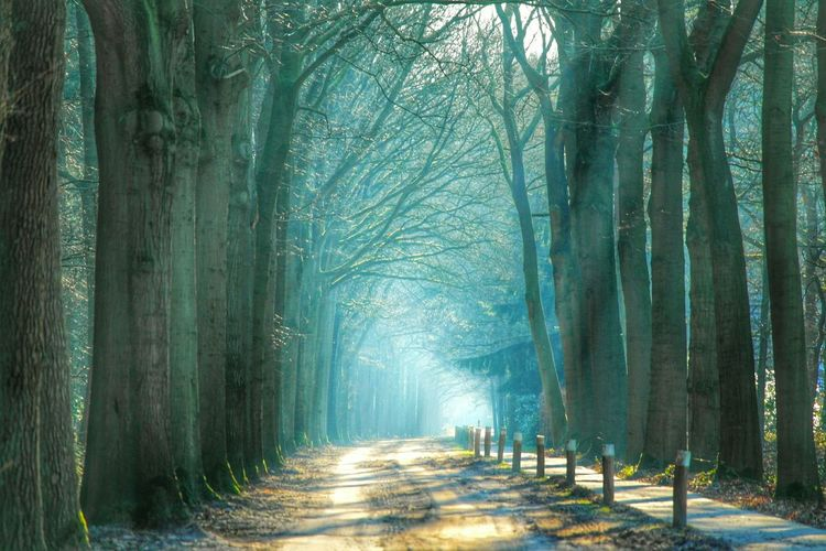 Dirt road between trees on foggy day
