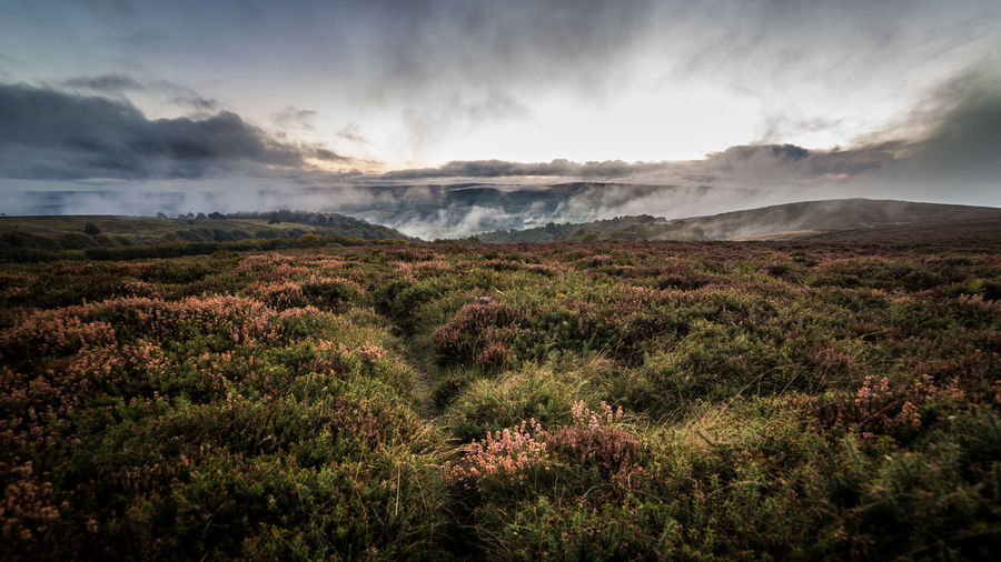 Heather moorland and fog in Somerset UK Beauty In Nature Cloud - Sky Day Environment Grass Heather Land Landscape Moody Moorland Mountain Mountain Range Nature No People Non-urban Scene Outdoors Plant Rolling Landscape Scenics - Nature Sky Tranquil Scene Tranquility Wilderness