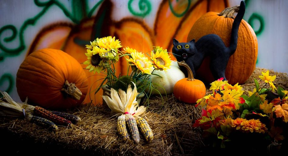 Organic pumpkins and flint corns by flowers on dry grass during halloween
