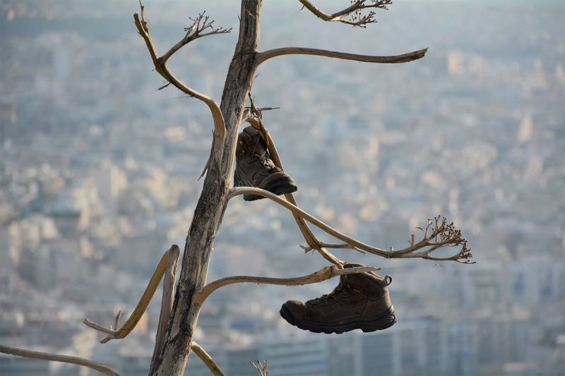 Who is missing his hiking boots? ;D Athens Athens, Greece Boots Branch Branches City Day Focus On Foreground Funny Greece Hanging Hiking Boots Lycabettus Nature No People Outdoors Shoes Sunny Sunny Day Travel Photography Tree Tree BYOPaper! Out Of The Box Let's Go. Together. Second Acts An Eye For Travel Colour Your Horizn Focus On The Story The Traveler - 2018 EyeEm Awards Be Brave