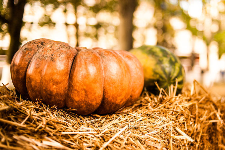 Close-up of pumpkins on hay