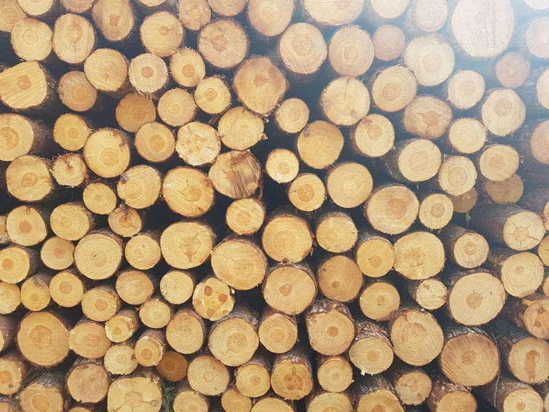 Forestry Industry Woodpile Backgrounds Stack Timber Heap Pattern Log Full Frame Wood - Material